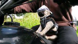 Koiran kanssa matkalla